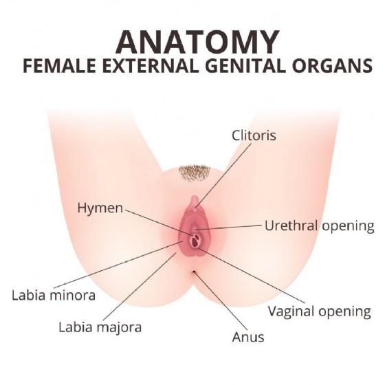 Anatomia della vulva