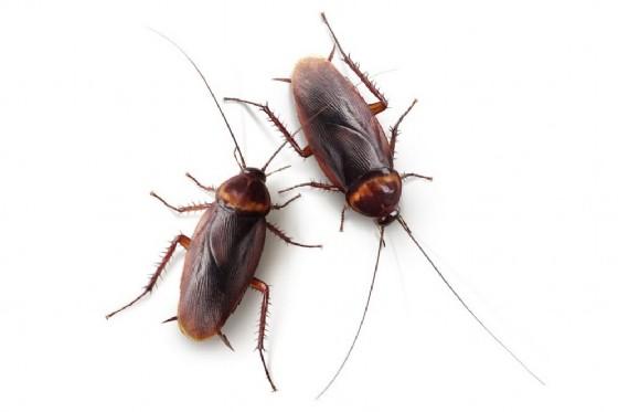 Farina dagli scarafaggi, la sfida del futuro dell'alimentazione