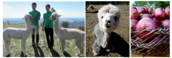 Casa Zanussi per il Territorio presenta: Passeggiando con gli alpaca alla caccia di ucelut, cipolla rosa e sementi antiche