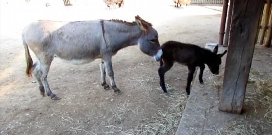 Il Parco Zoo Punta Verde di Lignano riapre i battenti