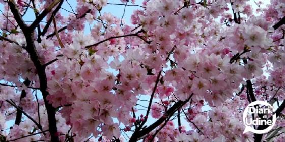 Arriva l'Equinozio: benvenuta Primavera! (© Diario di Udine)