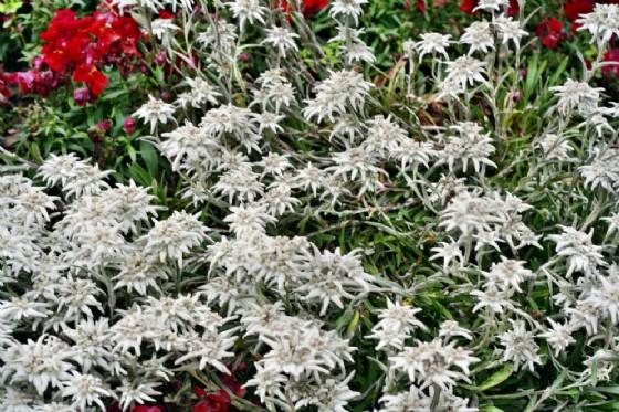 Flora protetta e specie esotiche invasive (© Adobe Stock)