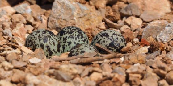 La nidificazione degli uccelli blocca i lavori nel Gemonese (© Adobe Stock)