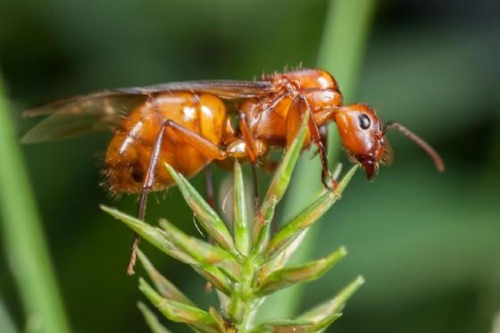"""Allarme insetti """"alieni"""" da Cina e Medioriente. E' boom di allergie"""