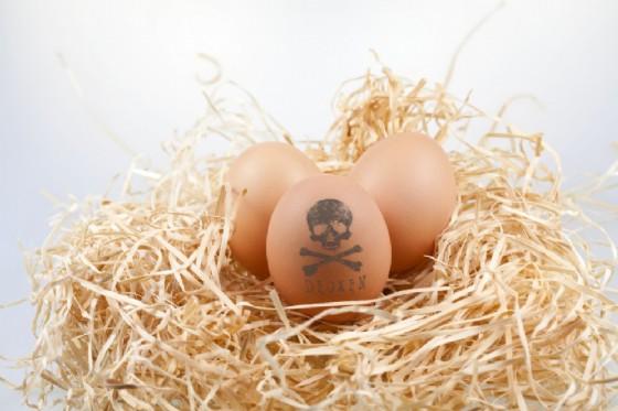 Frattolin, diffida all'Arpa per le analisi su diossine nei polli a Maniago (© Adobe Stock)