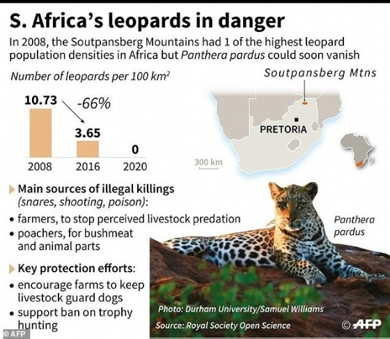 South Africa's leopards in danger
