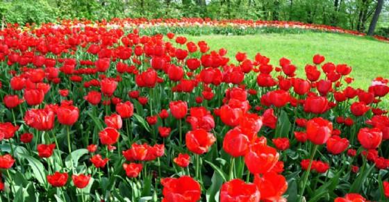 XVIII edizione di Messer Tulipano dal 1 aprile al 1 maggio 2017 (© Castello di Pralormo)