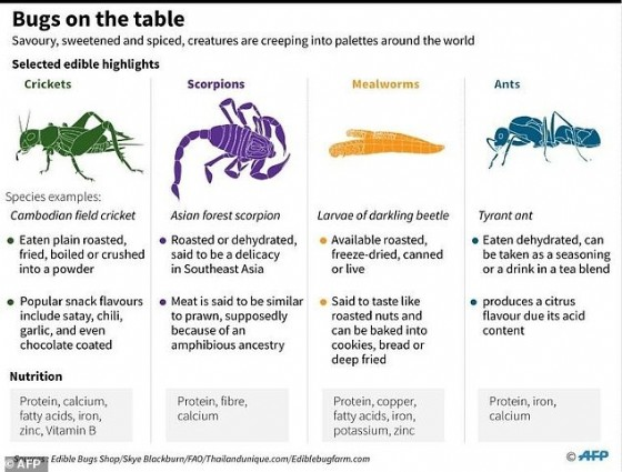High in protein, cheap to produce, and with a much lighter carbon footprint than meat or dairy farming, bugs are already part of the diet for more than two billion people worldwide, according to the United Nations.