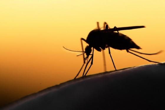 Stanno per tornare le zanzare, e con esse anche Zika