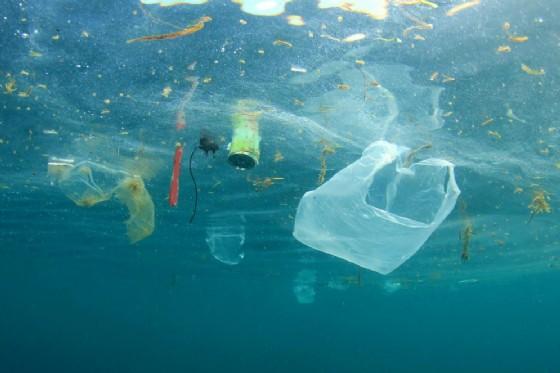 Mari sempre più inquinati (© Rich Carey | shutterstock.com)