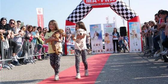 'Friuli Dog Show': torna la sfilata per gli amici a 4 zampe