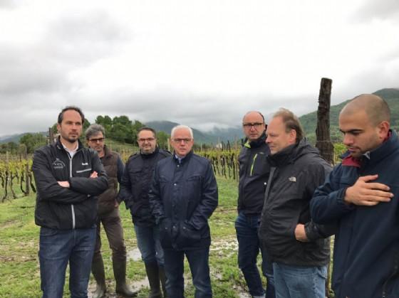 Cristiano Shaurli (Assessore regionale Risorse agricole e forestali) durante il sopralluogo a coltivazioni regionali (© Regione Friuli Venezia Giulia)