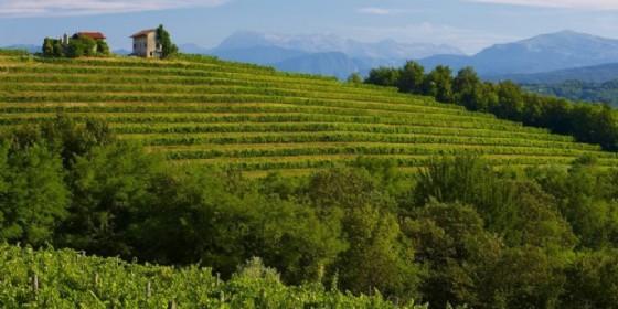 Fiera Regionale dei Vini di Buttrio: il vino di qualità abbinato al piacere della convivialità (© Adobe Stock)