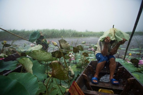 A local tourist guide uses a lotus leaf to shield his head during a summer storm on a lake in the Khao Sam Roi Yot national park in southern Thailand