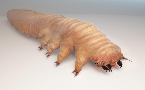 Un acaro demodex
