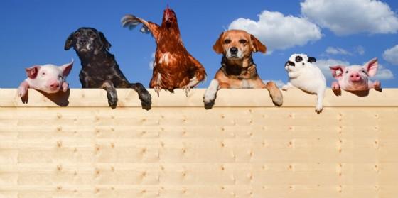 Il sabato della scienza: alla scoperta dei sistemi di comunicazione degli animali (© AdobeStock | Countrypixel)