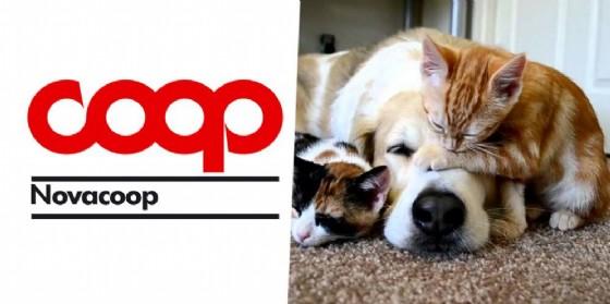 L'iniziativa a favore dei cani e gatti abbandonati della zona è programmata per sabato 17 giugno (© Diario di Biella)