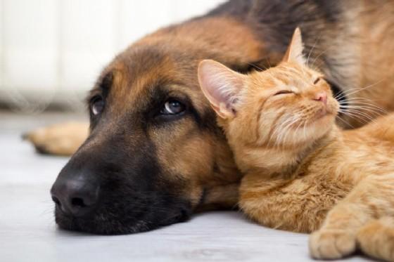 Anche cane e gatto possono soffrire il caldo