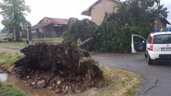 Un albero sradicato durante il maltempo (© Vittorio Bellone)