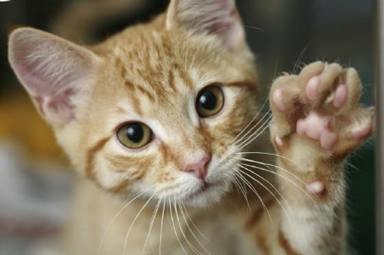 Sterilizzazioni gatti liberi: prevenzione necessaria (© Adobe Stock)