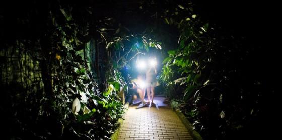 Torna 'La notte delle farfalle' (© Casa delle Farfalle di Bordano)