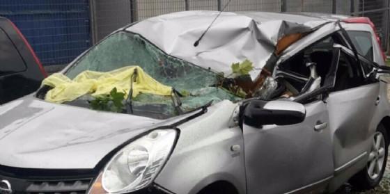 Platano cade su un'auto in corsa: donna miracolata (© G.G.)