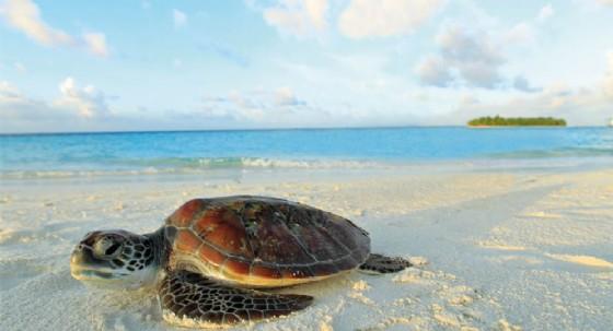 Angsana Velavaru: turismo sostenibile alla Maldive