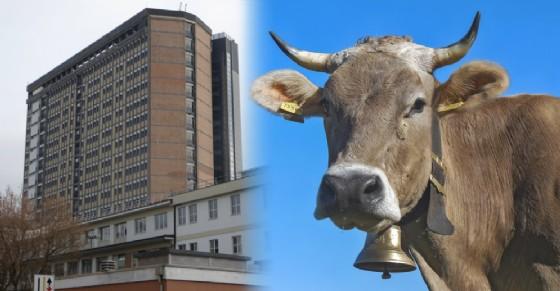 L'allevatore è stato trasportato al Cto di Torino dopo esser stato colpito dalla mucca (© Diario di Torino)