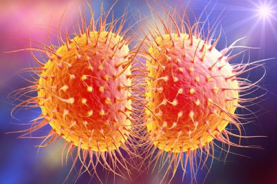 Il batterio della gonorrea