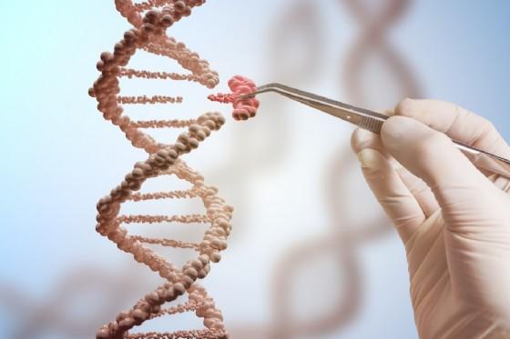 Usa: modificati embrioni umani per la prima volta senza errori