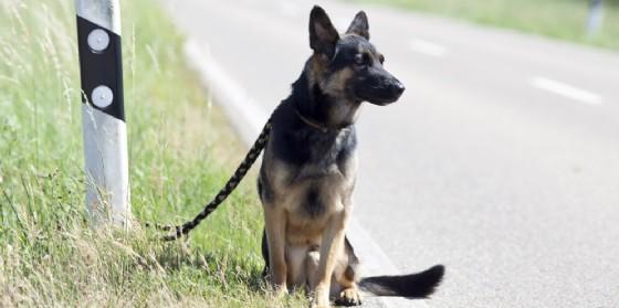 Abbandonare gli animali domestici può comportare l'arresto (© AdobeStock   anjajuli)