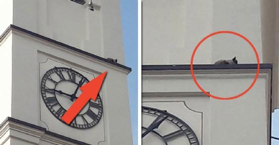 Il gatto sul campanile (© Cristiano Tassinari)