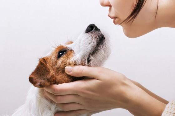 Fasi baciare dal cane è pericoloso?