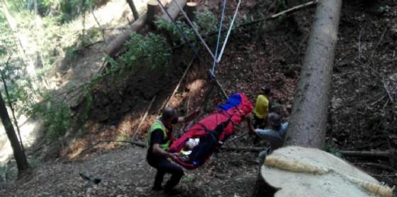 Boscaiolo tarvisiano rimasto ferito dalla caduta di una pianta (© Cnsas)