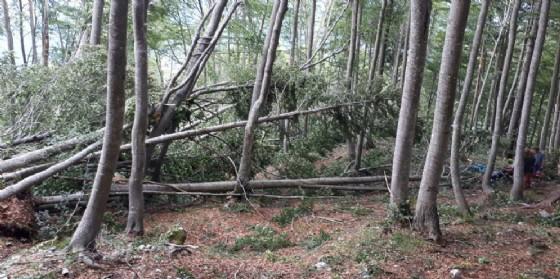 Recuperato il turista belga investito da un albero nei pressi di Malga Chiampis