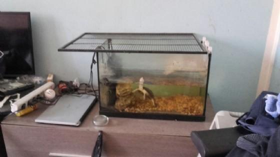 La tartaruga trovata in via Fontanesi