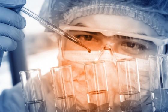 Trapianti, maiali con DNA modificato per fornire organi all'uomo