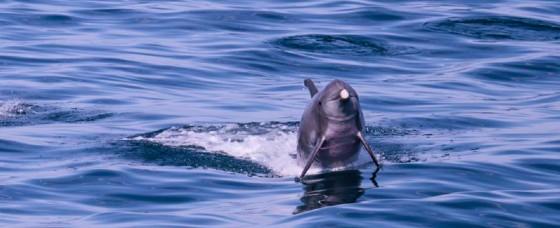 I delfini avvistati dall'associazione