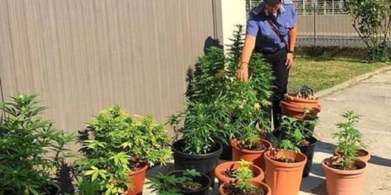 Coltivavano marijuana sul tetto di una scuola materna: arrestati