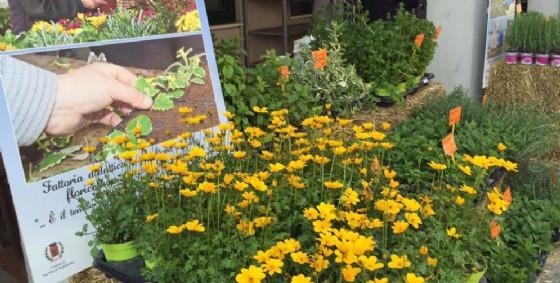 L'agricoltura sociale: la terapia secondo i ritmi della natura a Casarsa della Delizia (© Il Piccolo Principe)