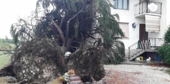 Tromba d'aria a Primulacco: albero danneggia una casa (© G.G.)