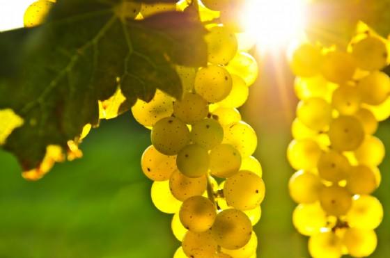 65ma Festa dell'Uva e del Vino di Carema (© Shutterstock.com)