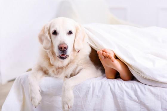 Dormire con il cane migliora la qualità del sonno
