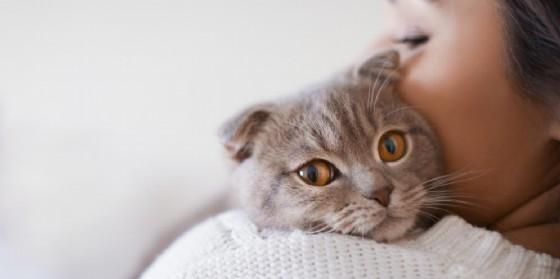 Il gatto può trasmettere la toxoplasmosi