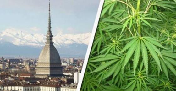 Cannabis (© Diario di Torino)
