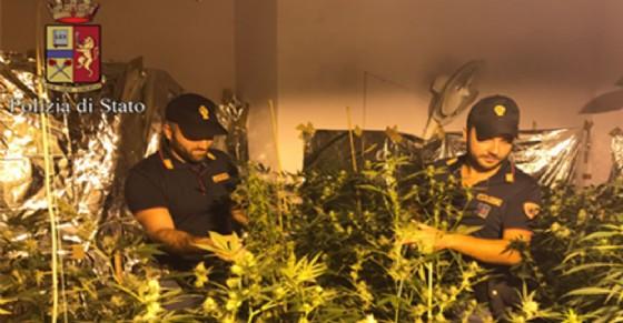 Coltivazione di marijuana in appartamento in Barriera di Milano (© Polizia di Stato)