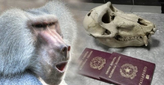 Il cranio è stato ritrovato all'interno della valigia dell'uomo