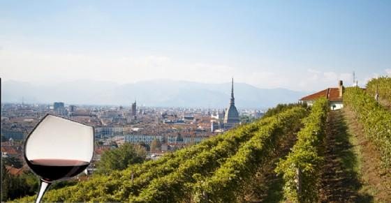 La vendemmia a Torino - Grape in town