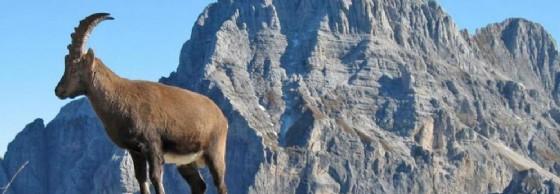 Montagna: un disegno di legge per valorizzare le strutture alpine (© Turismo Fvg)