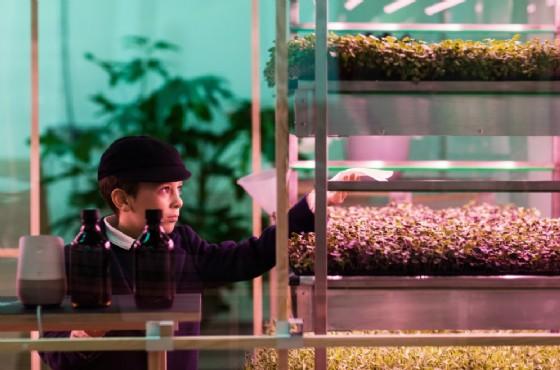 Ora Ikea pensa all'indoor farming e progetta la sua catena di cibo (in negozio)